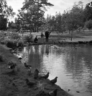 Sibeliuksen puisto, sorsalammikko.