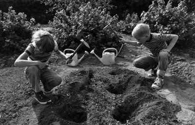 Kaksi poikaa (Tuomas Heikkilä ja Aapo Rista) kuokkimassa maata taimien istuttamista varten Kumpulan koulukasvitarhassa