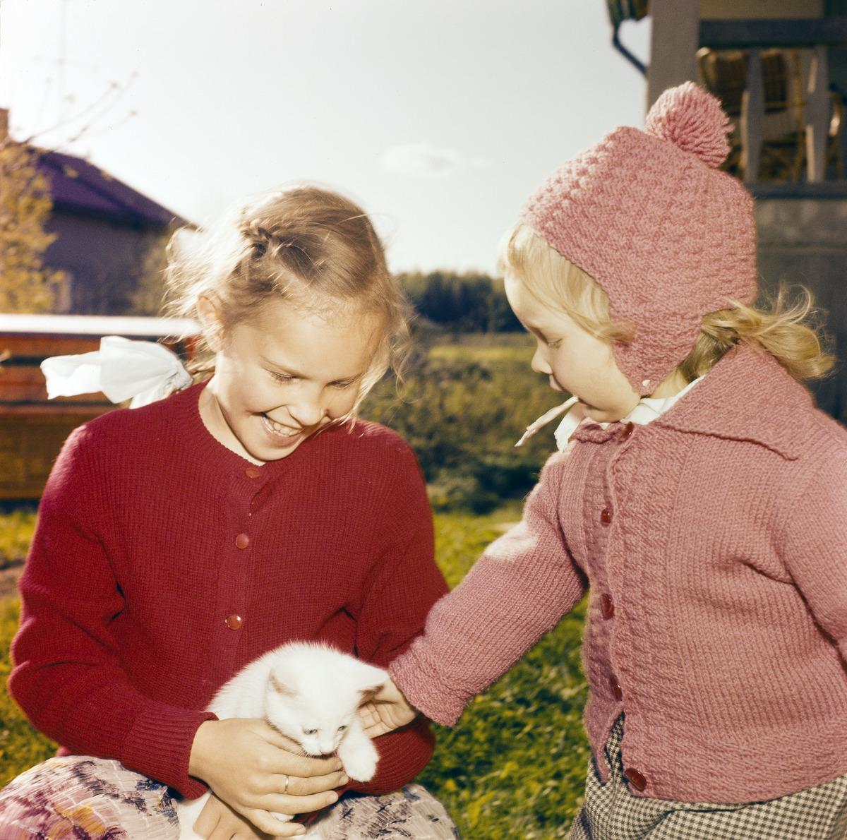 Kaksi lasta ihastelee pientä valkoista kissanpentua.