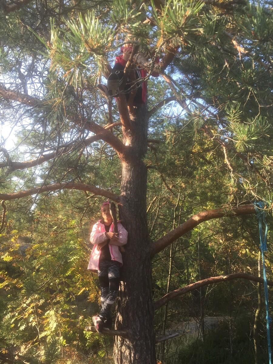 Koskela, puuhun kiivenneitä lapsia metsässä.
