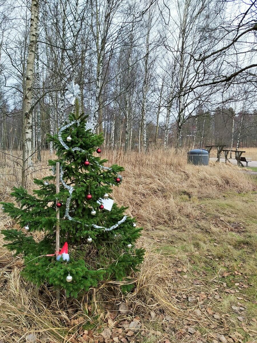Joulukoristein koristeltu pieni joulukuusi Herttoniemen kartanonpuistossa lähellä Herttoniemen mattolaituria, välillä Herttoniemensalmi - Tiiliruukinlahti