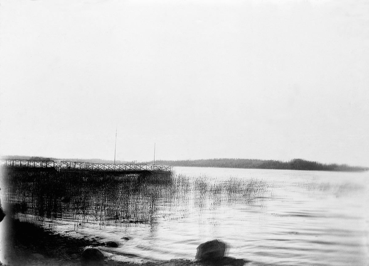 Koivusaari