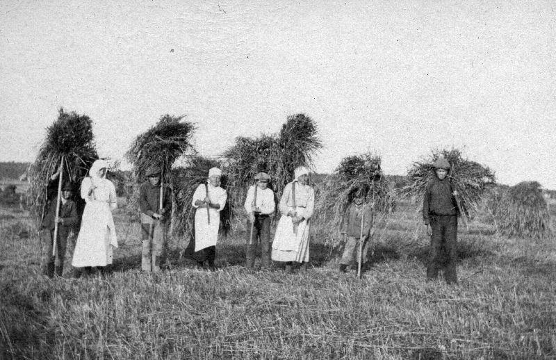 Kaukajärven kartanon työntekijöitä heinäpellolla, 1910 - 1919 Museokeskus Vapriikki